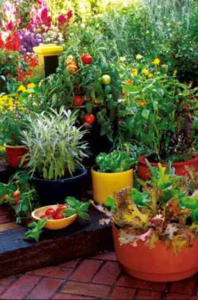 best potting mix for containers